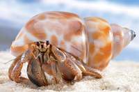 cute hermit-crab photo